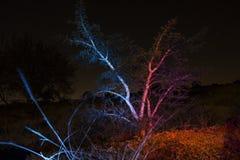 Trädet tänder upp Royaltyfria Foton