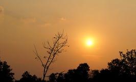 trädet under himlen är en mörk bakgrund, sol Royaltyfri Fotografi