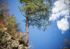 Trädet växer på stora stenar på en klippa arkivbild