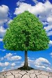 Trädet växer på torr jordning mot himlen. Arkivfoton