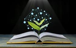 Trädet växer upp från boken med ljust skina som att få kunskap på svart bakgrund, begrepp, som öppnande papper ska se kunskap av arkivfoto