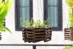 Trädet växter för hem- garnering, tillfogar skönhet till trädgården arkivfoto
