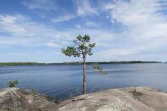 Trädet vaggar på, ensamt men med en sikt royaltyfria bilder