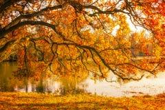 Trädet vid sjön under höst i Lednice parkerar arkivfoton
