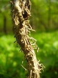 Trädet zoomar in den gröna skogen royaltyfri fotografi