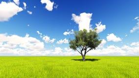 Trädfältet av gräs och perfekt himmel landskap tolkningen 3D Arkivfoto