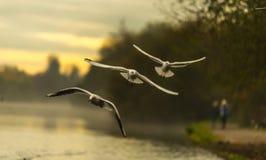 Trädfåglar som flyger morgonsjön Royaltyfri Foto