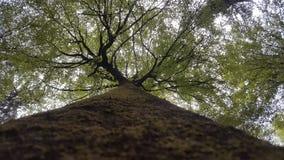Trädförälskelse Royaltyfria Bilder