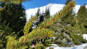 Trädfilial i den snöig skogen Arkivbild