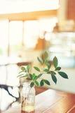Trädfilial i exponeringsglas Fotografering för Bildbyråer