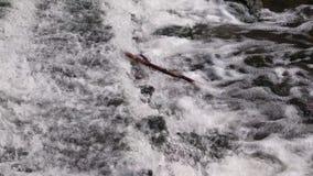 trädfilial i flödande vatten, vattenfall på sommar närbild natur arkivfilmer