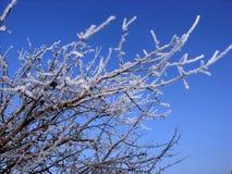 Trädfilial i rimfrost mot den blåa himlen fotografering för bildbyråer