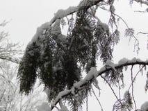 trädfilial i snön Fotografering för Bildbyråer