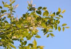 Trädfilial på himmelbakgrund Arkivfoto
