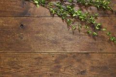 Trädfilial på lantlig wood bakgrund Royaltyfri Foto