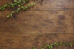 Trädfilial på lantlig wood bakgrund Fotografering för Bildbyråer