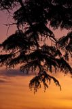 Trädfilial Silhouetted mot en solnedgång Royaltyfria Bilder