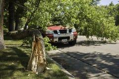Trädfilial som faller på lastbilen Arkivbild