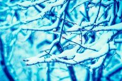 Trädfilial som täckas med insnöad vinter Arkivbilder