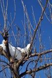 Trädfilial som täckas med snö Royaltyfri Bild