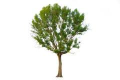 Trädfilialen Arkivfoto
