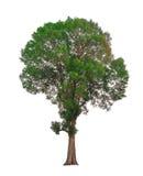 Trädfilialen Arkivfoton