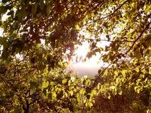 Trädfilialen på solen med sommar färgar royaltyfria bilder