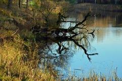 Trädfilialen reflekterade i vatten i en parkera Arkivfoto