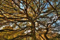 Trädfilialer Arkivbilder