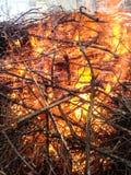 Trädfilialer bränner i en brand i vinter Enorm hög av filialer royaltyfri foto