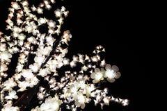 Trädfilialer exponerade av julljus som dekorerar gatorna av Agueda Portugal royaltyfria bilder