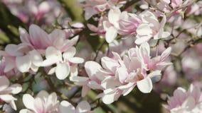 Trädfilialer i blomning Arkivbild