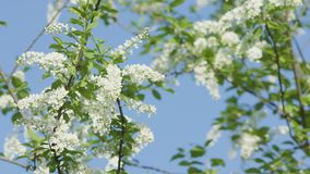 Trädfilialer i blomning Arkivbilder