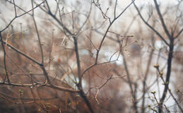 Trädfilialer i droppar av regn Arkivfoto