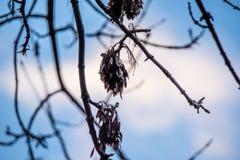 Trädfilialer i en trevlig bakgrund Royaltyfria Foton