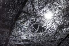 Trädfilialer i frosten på bakgrunden av en nattlykta arkivbilder