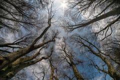 Trädfilialer i himlarna arkivfoton