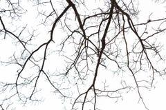 Trädfilialer i himmel Arkivfoto