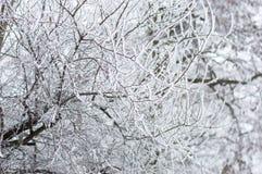 Trädfilialer i snön Royaltyfri Fotografi
