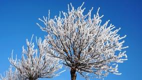Trädfilialer i snön mot den blåa himlen royaltyfri fotografi