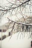 Trädfilialer i vinterryssskog på soldagen med snö arkivfoto