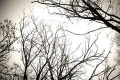Trädfilialer inga svartvita sidor Torr död bakgrund för trädisolatvit Arkivfoton