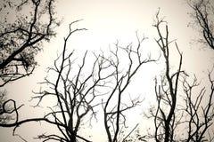 Trädfilialer inga svartvita sidor Torr död bakgrund för trädisolatvit Fotografering för Bildbyråer