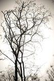 Trädfilialer inga svartvita sidor Torr död bakgrund för trädisolatvit Royaltyfri Foto