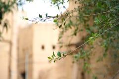 Trädfilialer med forntida gyttjabyggnader baktill royaltyfri bild