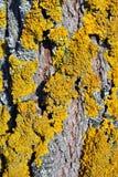 Trädfilialer med skället och gul mossa, vertikal bakgrund royaltyfri bild