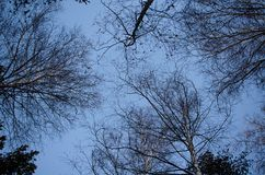 Trädfilialer mot den blåa himlen arkivfoto
