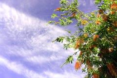 Trädfilialer mot himmelsommarbakgrunden Arkivfoton