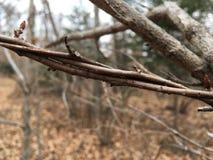 Trädfilialer, närbild Natur av hösten royaltyfria bilder