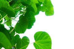 Trädfilialer och sidor är gröna Royaltyfria Foton